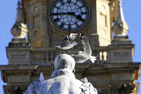 April 18, 2017. Seagulls on the head of King Edward VII statue on the parade opposite the City Hall where the City of Cape Town plans to build a statue of former president Nelson Mandela. Mandela gave his first speech on the balcony of the City Hall when he was released from prison in 1990.  PHOTOGRAPH: ESA ALEXANDER/THE TIMES